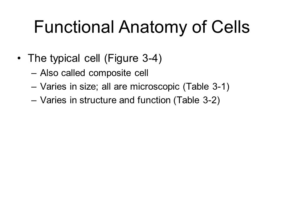 Chapter 3 Anatomy of Cells. Functional Anatomy of Cells The typical ...