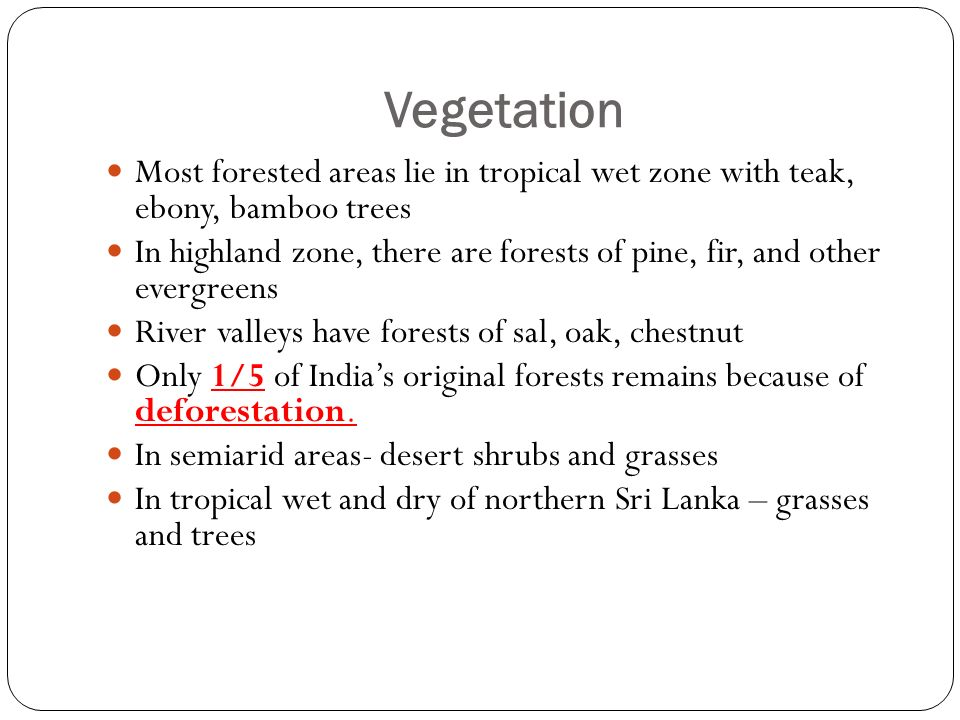 Vegetation Most forested areas lie in tropical wet zone with teak, ebony, bamboo trees In highland zone, there are forests of pine, fir, and other evergreens River valleys have forests of sal, oak, chestnut Only 1/5 of India's original forests remains because of deforestation.