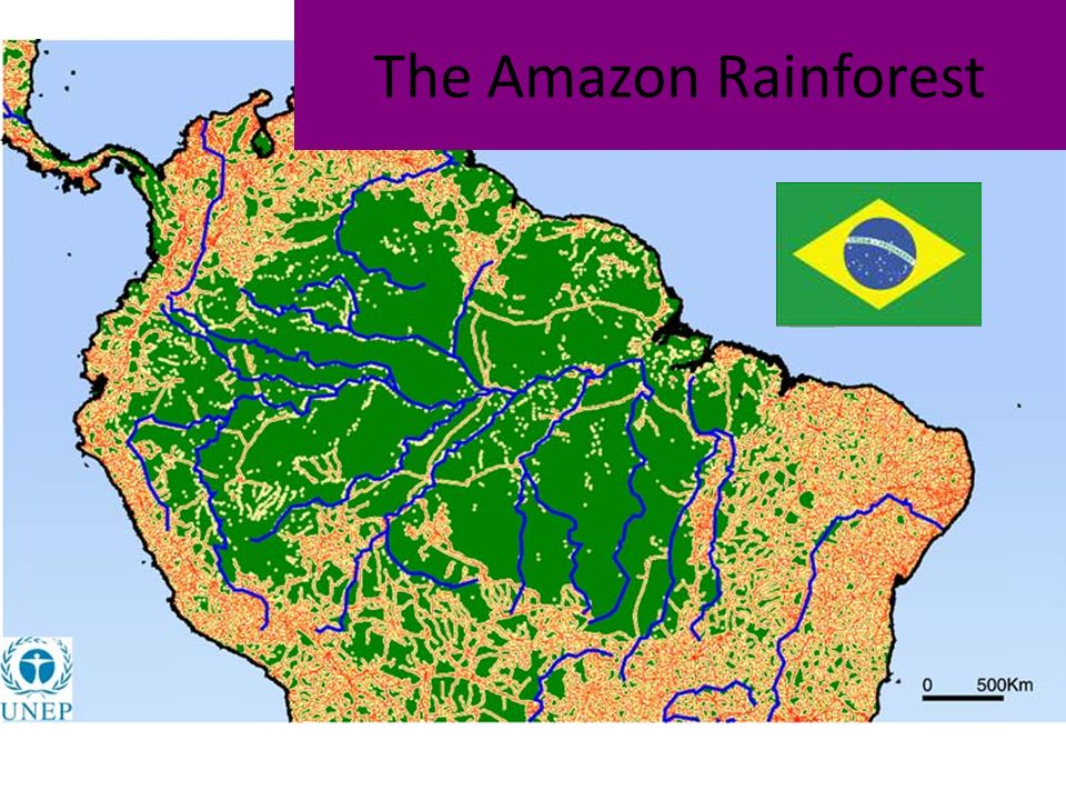 Map Of Amazon Rainforest The Amazon Rainforest. Objectives Use a mind map technique to