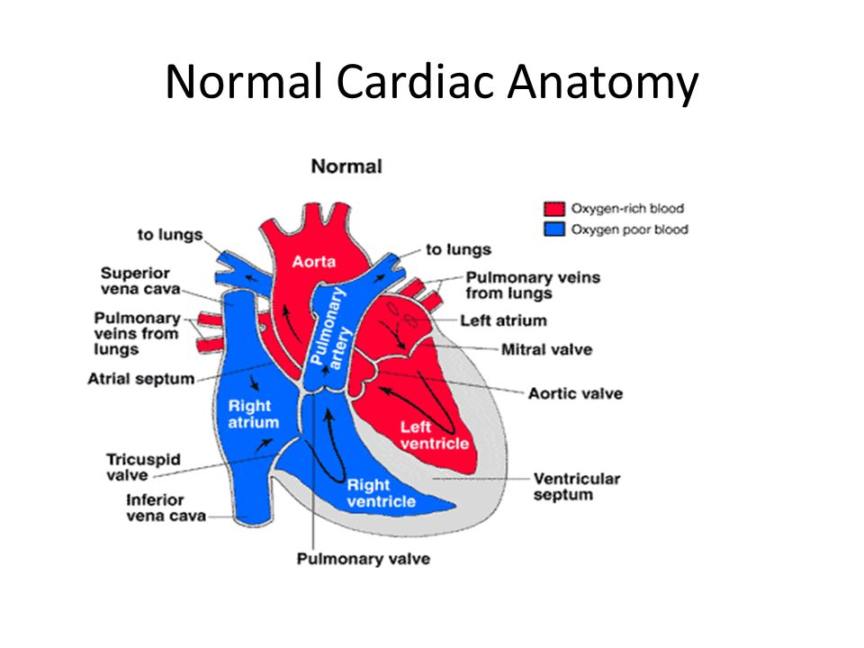 Cardiopulmonary Disorders. Common Cardiac Disorders Coronary Artery ...