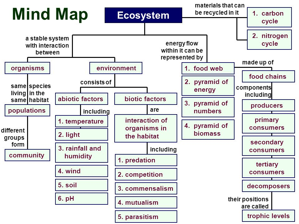 Mind Map Ecosystem Organisms Populations A Stable System With