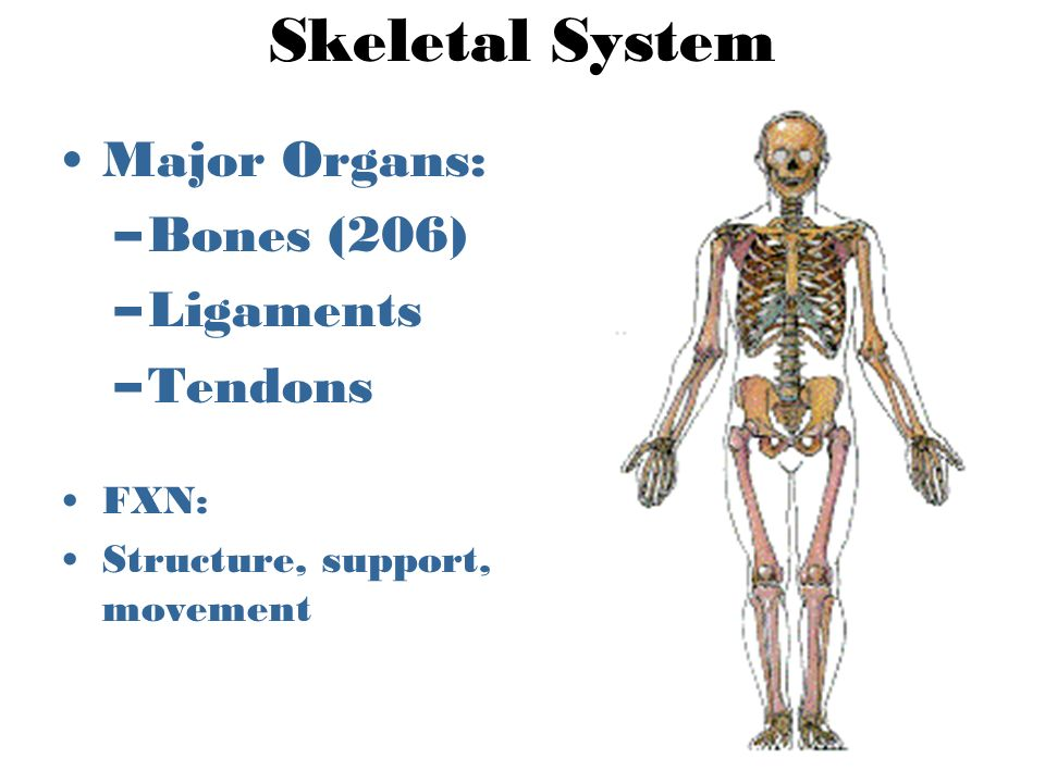 Organ Systems Warm Up Can You Name All Of The Human Body Systems