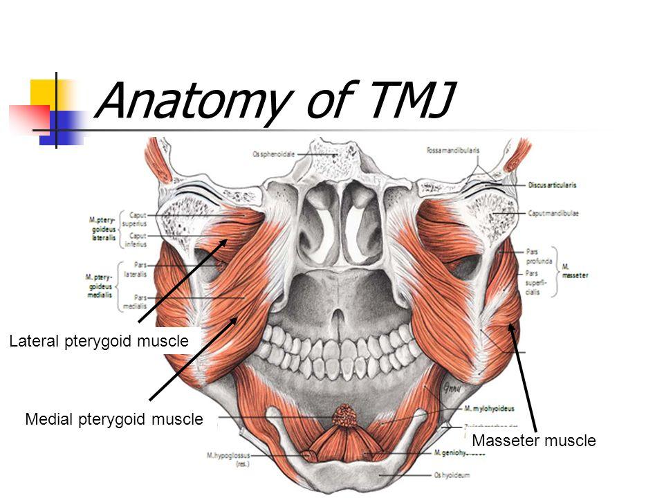 Biology Of The Human Dentition Temporomandibular Joint Tmj Ppt