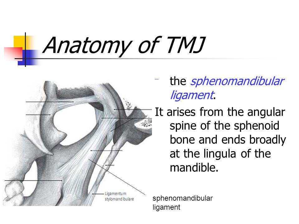 BIOLOGY OF THE HUMAN DENTITION Temporomandibular Joint -TMJ. - ppt ...