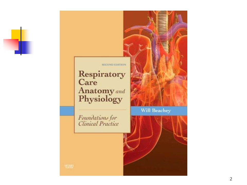 Anatomy & Physiology of The Respiratory System - ppt video online ...