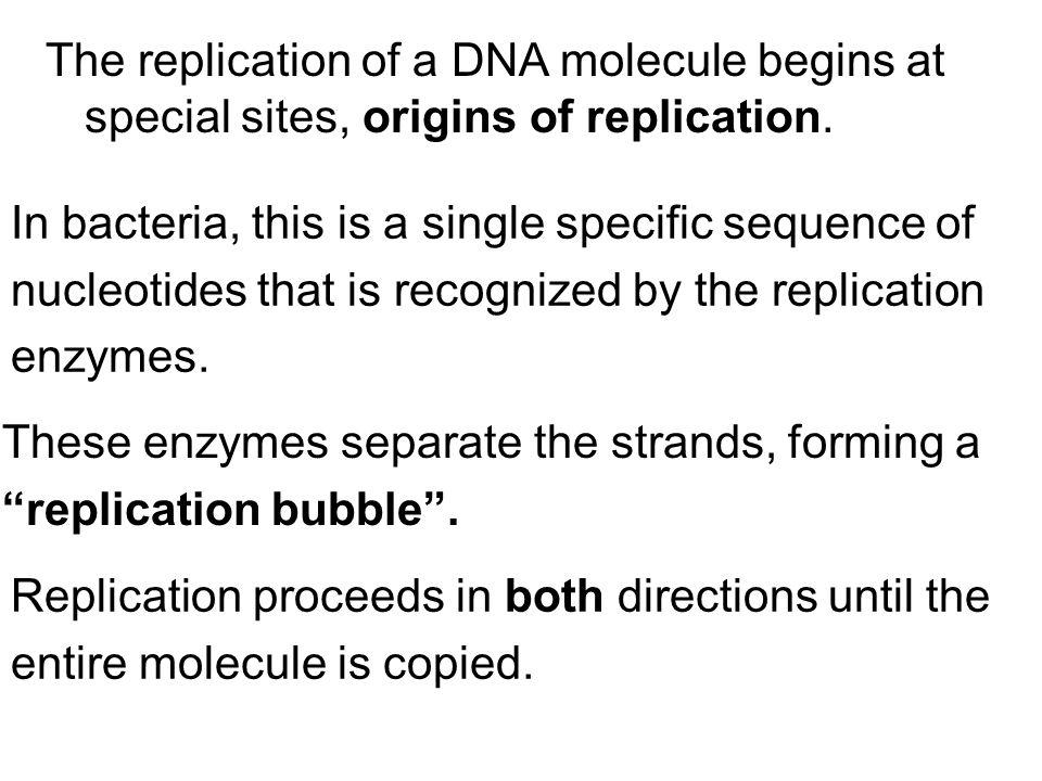 311c worksheet10_dna+a name_key bio 311c worksheet dna structure.