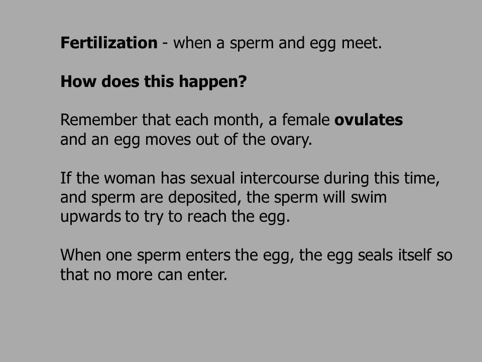 Can you tell when a sperm fertilizes an egg