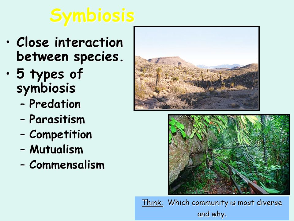 What are the types of interaction