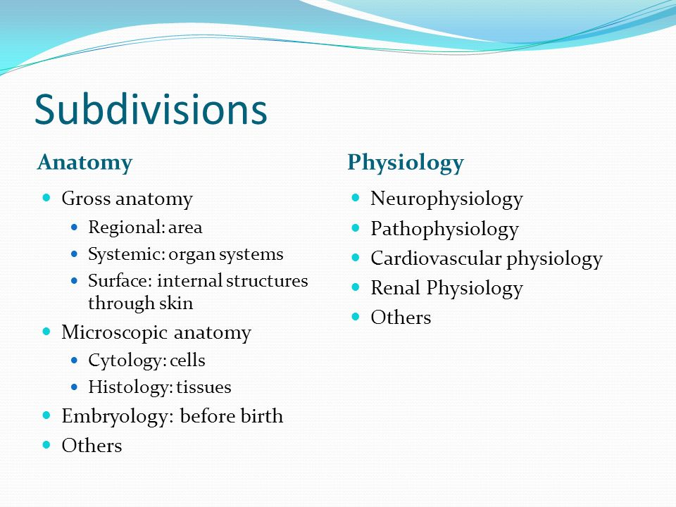 Chapter 1. Human Anatomy and Physiology Anatomy: the study of body ...