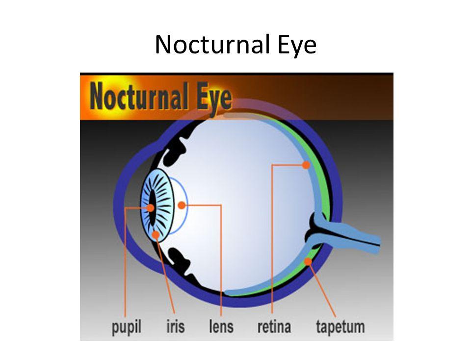 Spook Fish Eyes How We See Eye Anatomy Nocturnal Eye Ppt Download