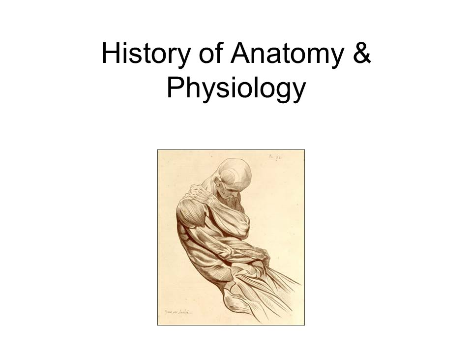 History of Anatomy & Physiology. Edwin Smith Papyrus Textbook on ...