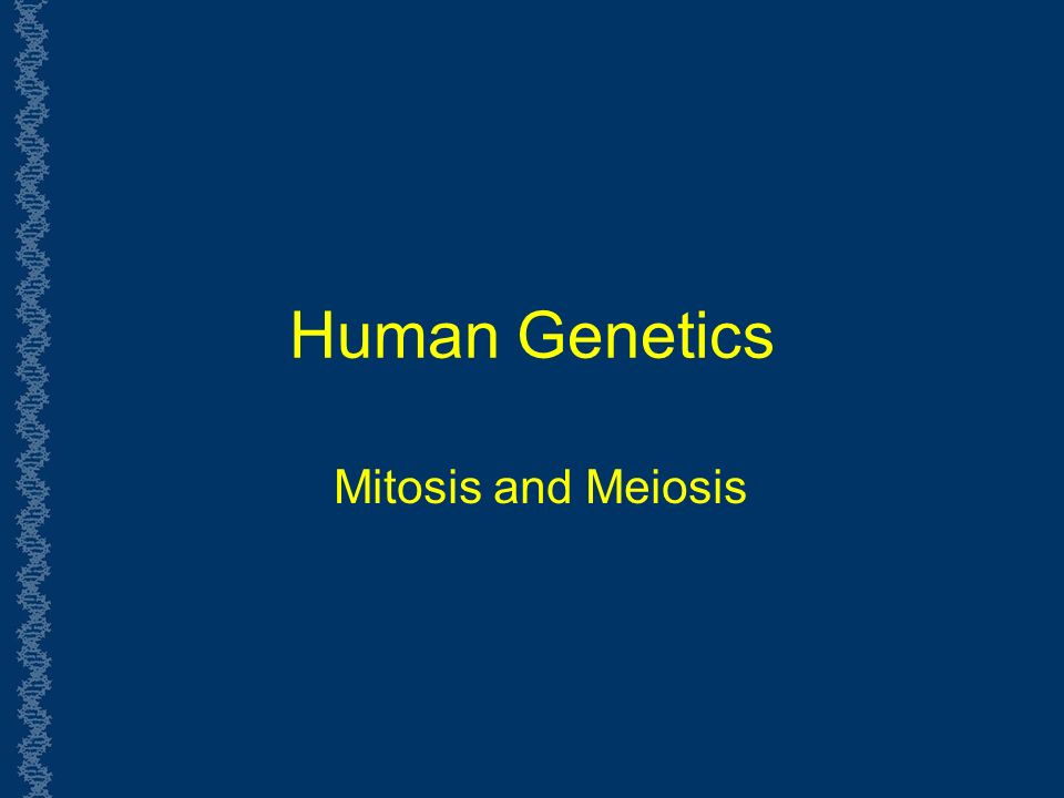 Human Genetics Mitosis and Meiosis