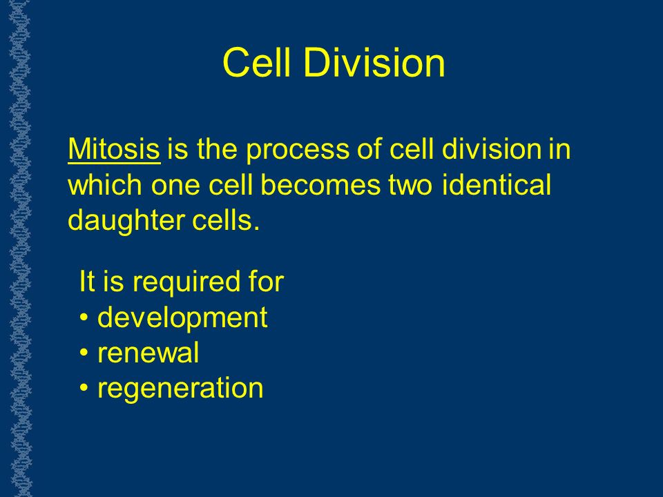 Cell Division Mitosis is the process of cell division in which one cell becomes two identical daughter cells.