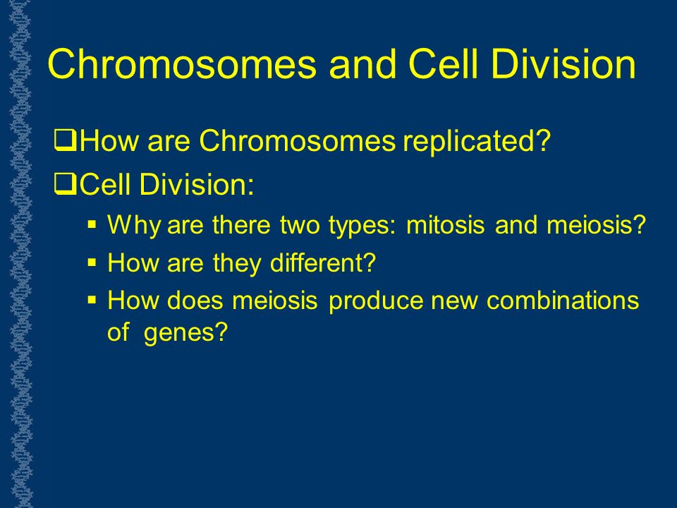 Chromosomes and Cell Division  How are Chromosomes replicated.