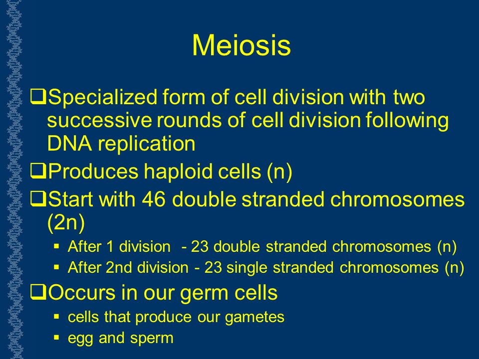 Meiosis  Specialized form of cell division with two successive rounds of cell division following DNA replication  Produces haploid cells (n)  Start with 46 double stranded chromosomes (2n)  After 1 division - 23 double stranded chromosomes (n)  After 2nd division - 23 single stranded chromosomes (n)  Occurs in our germ cells  cells that produce our gametes  egg and sperm