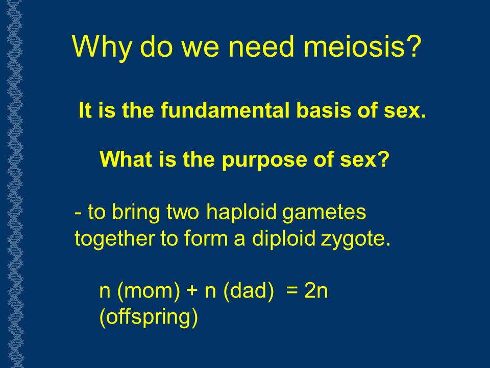 Why do we need meiosis. - to bring two haploid gametes together to form a diploid zygote.