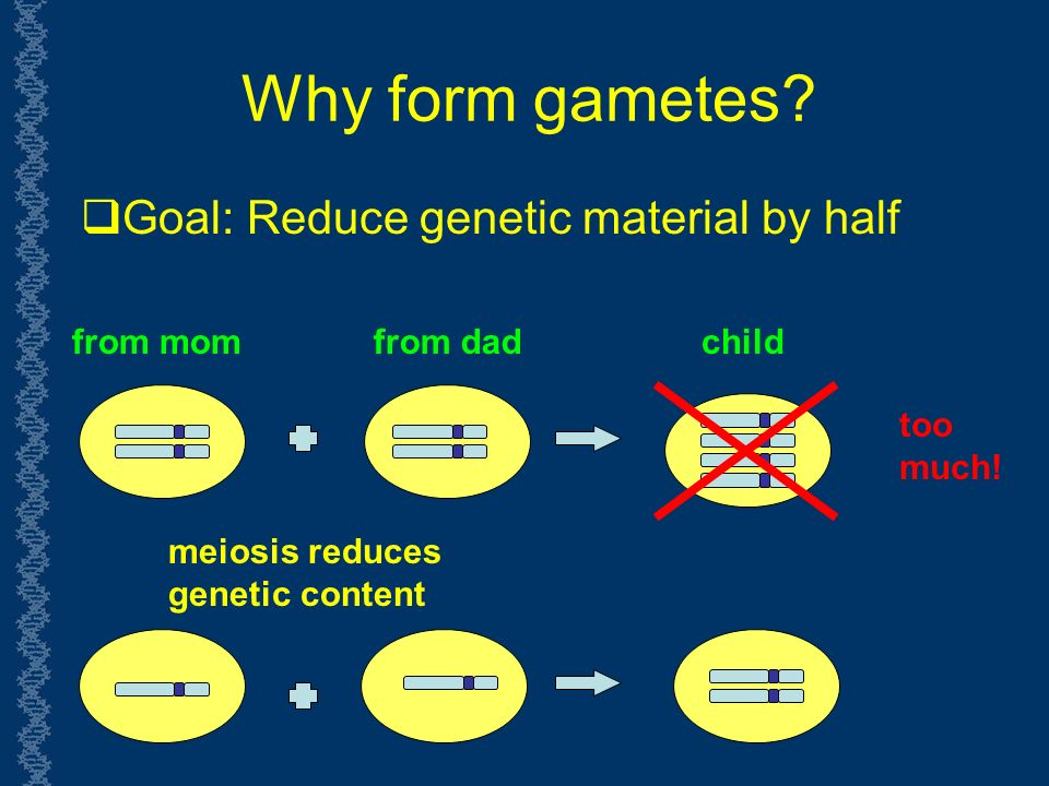 Why form gametes.