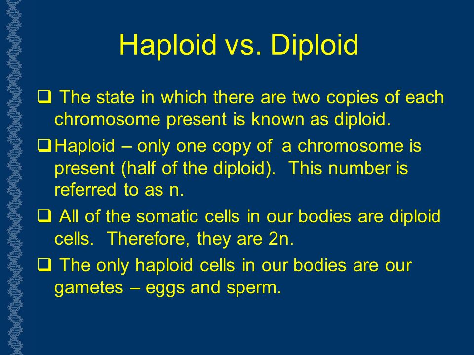 Haploid vs.