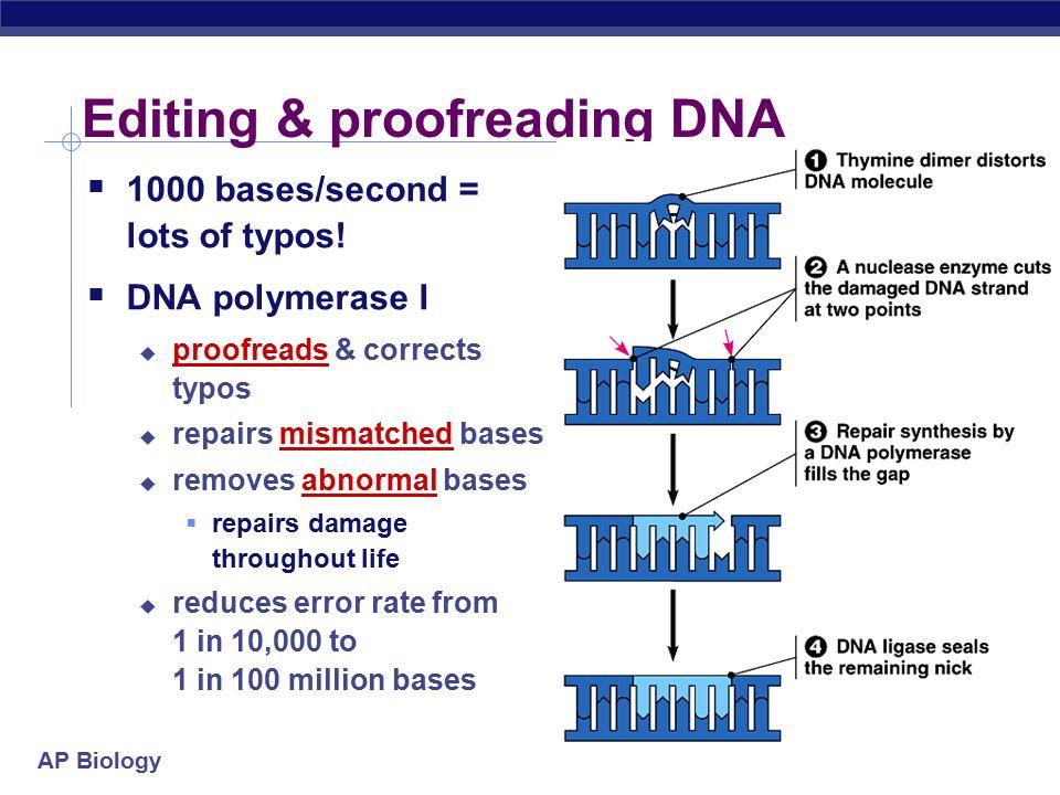 proofreading biology