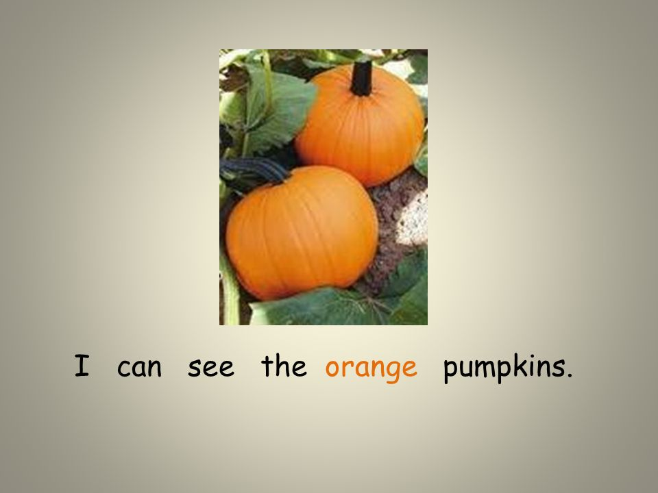I can see the orange pumpkins.