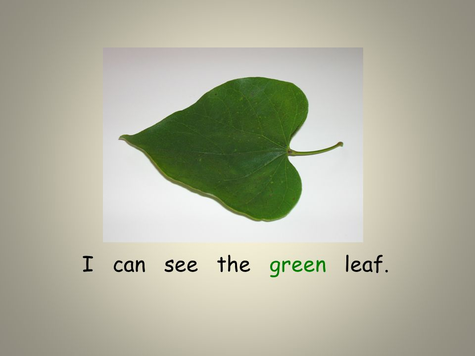I can see the green leaf.