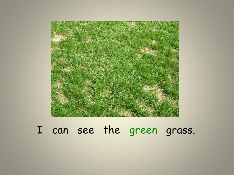 I can see the green grass.