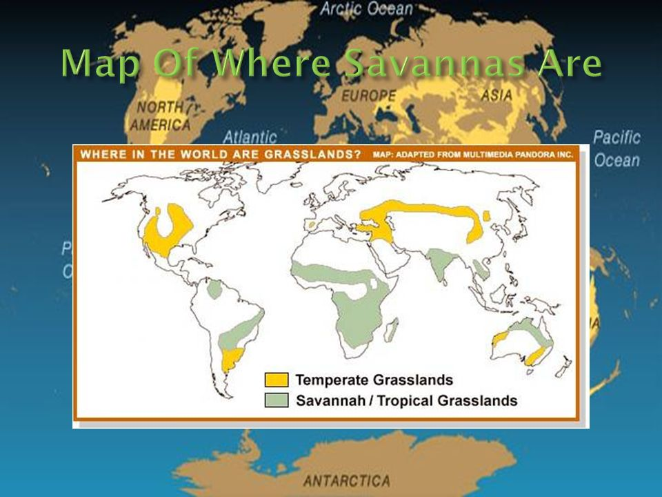 Savanna Biome World Map.My Words Savanna S Are Grasslands With Shrubs And Isolated Trees