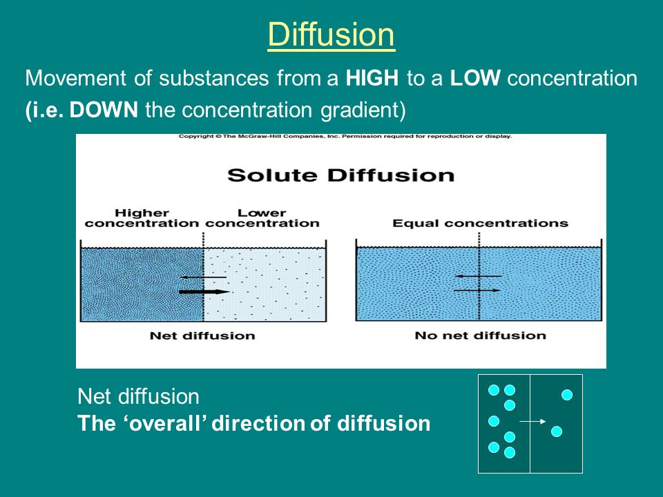 Osmosis, Diffusion and Active Transport. Objectives 1.Define ...