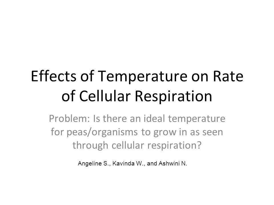 temperature and cellular respiration