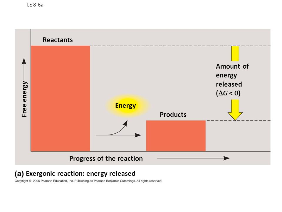 Exergonic and Endergonic Reactions in Metabolism An exergonic reaction proceeds with a net release of free energy and is spontaneous An endergonic reaction absorbs free energy from its surroundings and is nonspontaneous