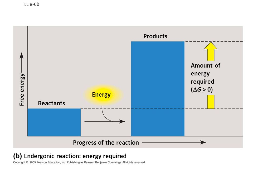 LE 8-6a Reactants Energy Products Progress of the reaction Amount of energy released (  G < 0) Free energy Exergonic reaction: energy released