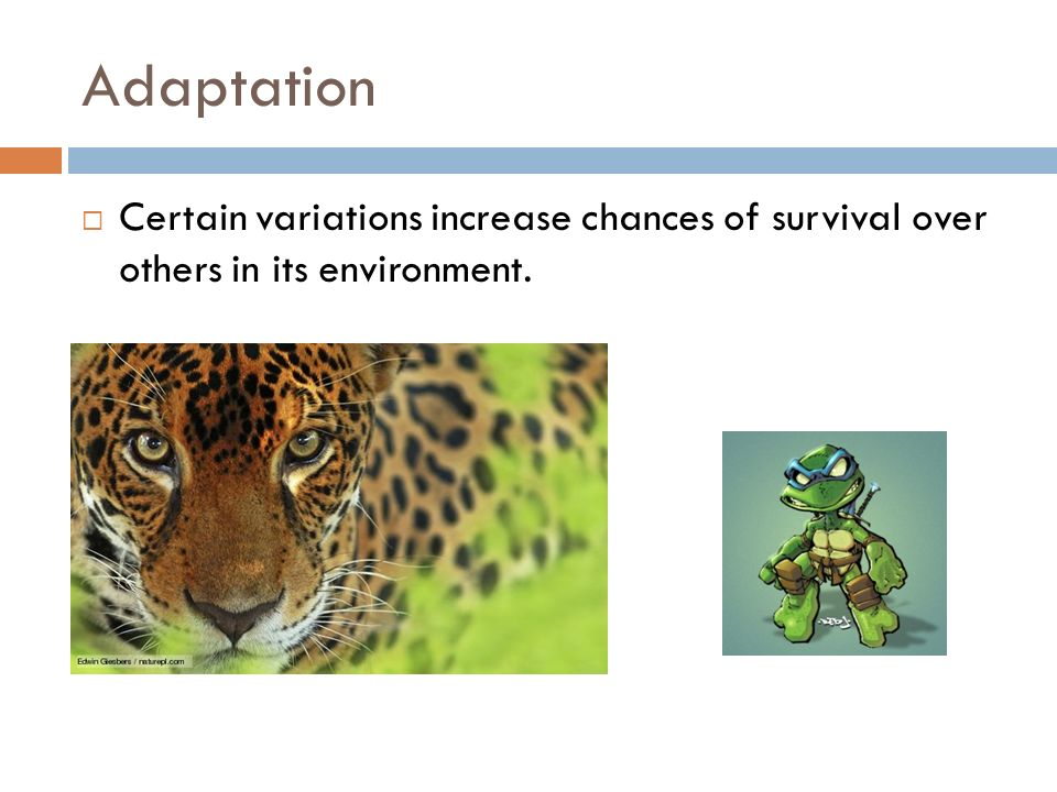 Overproduction  Increased offspring = Increased chance for some to survive  Results in competition for resources