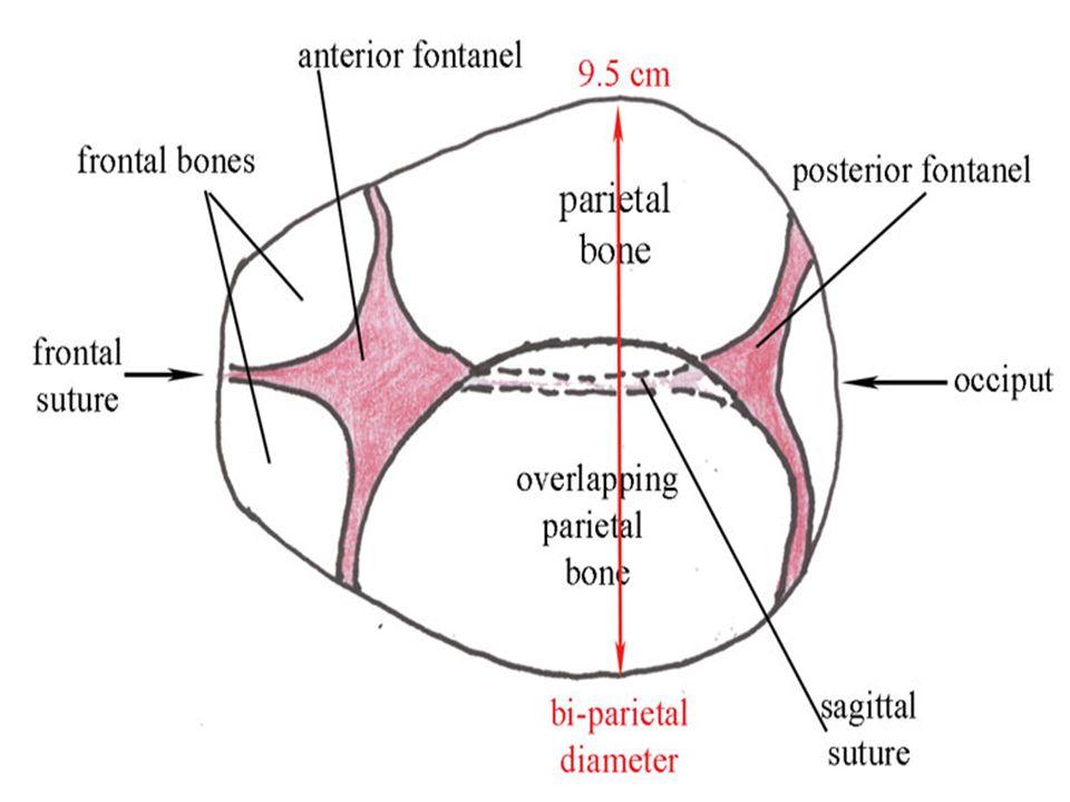 Diagram Of Fetal Skull Diameters - Auto Electrical Wiring Diagram •