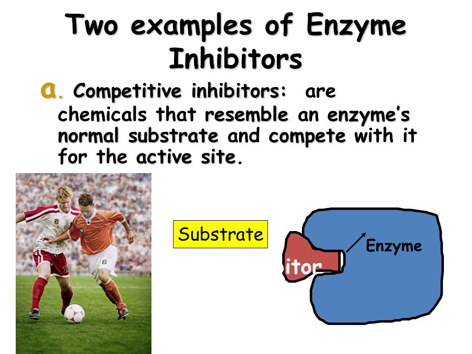 23 Two examples of Enzyme Inhibitors a.