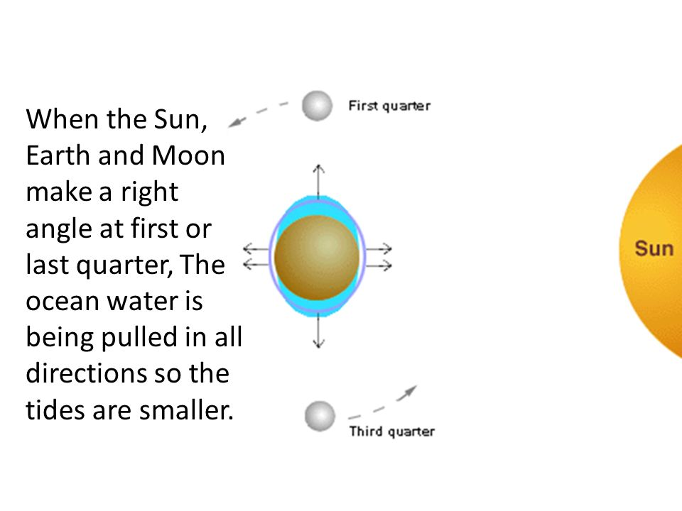When the Sun, Earth and Moon make a right angle at first or last quarter, The ocean water is being pulled in all directions so the tides are smaller.