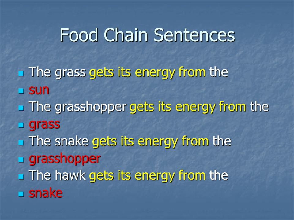 Food Chain Sentences The grass gets its energy from the The grass gets its energy from the sun sun The grasshopper gets its energy from the The grasshopper gets its energy from the grass grass The snake gets its energy from the The snake gets its energy from the grasshopper grasshopper The hawk gets its energy from the The hawk gets its energy from the snake snake