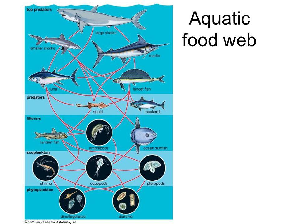 slide_9 food chains & food webs food chains vs food webs food chain