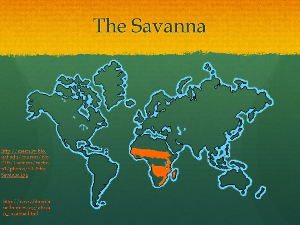 Savanna Biome World Map.Savanna Biome Savanna Biome Information Made By Lea Ppt Download