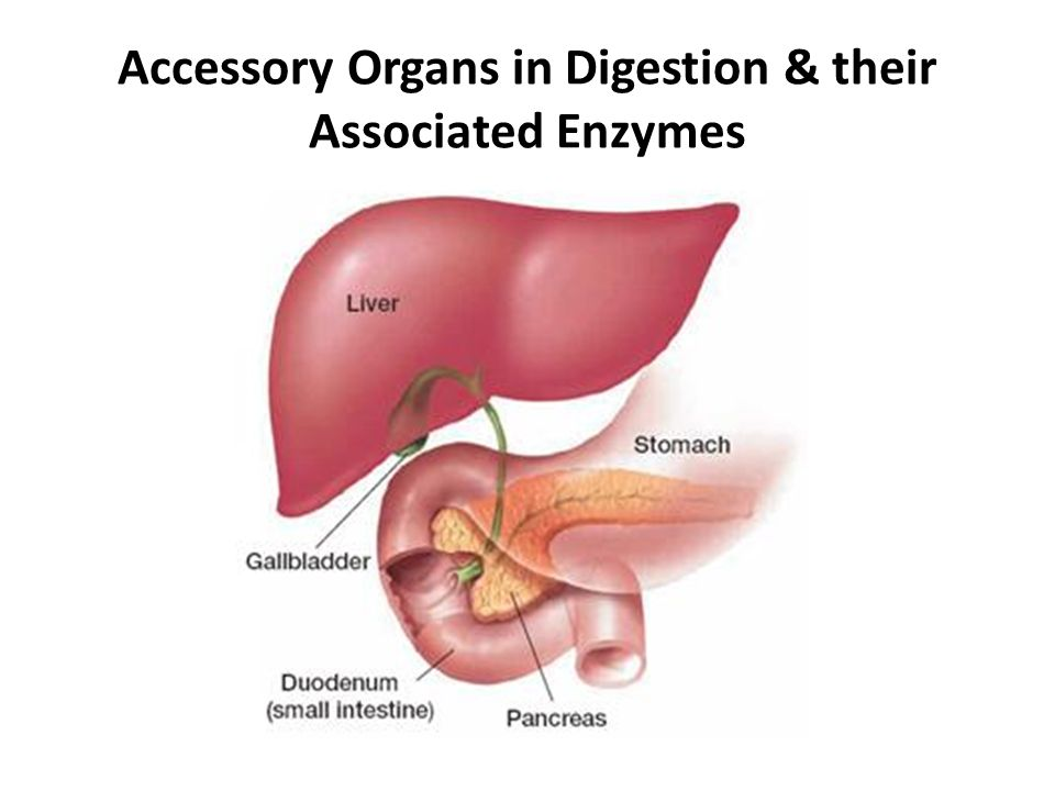 Which Of The Following Is An Accessory Organ Of Digestion Unique Accessory Organs In Digestion Their Associated Enzymes Ppt Download