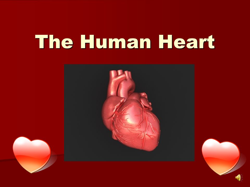 The Human Heart Diagram Of The Heart Chambers Of The Heart The