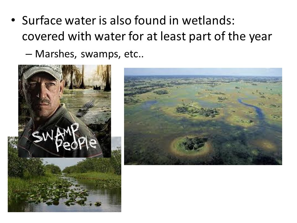 Surface water is also found in wetlands: covered with water for at least part of the year – Marshes, swamps, etc..