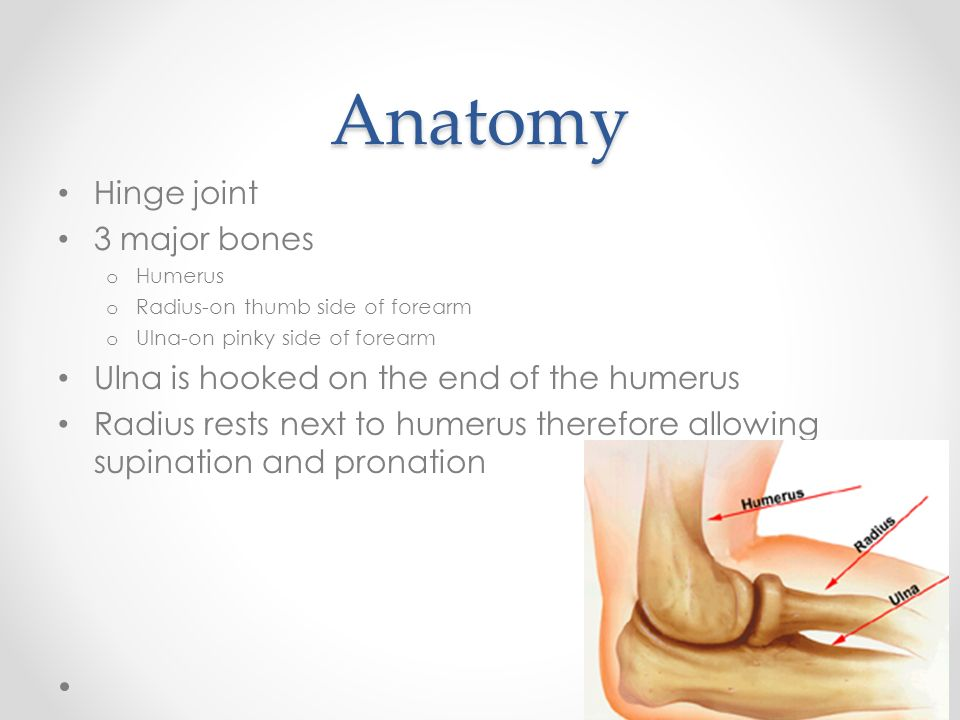 Ch 20 Elbow And Forearm Objectives Define The Major Landmarks Of