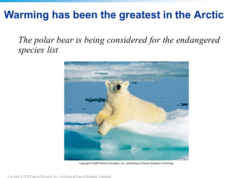 Copyright © 2008 Pearson Education, Inc., publishing as Pearson Benjamin Cummings Warming has been the greatest in the Arctic The polar bear is being considered for the endangered species list