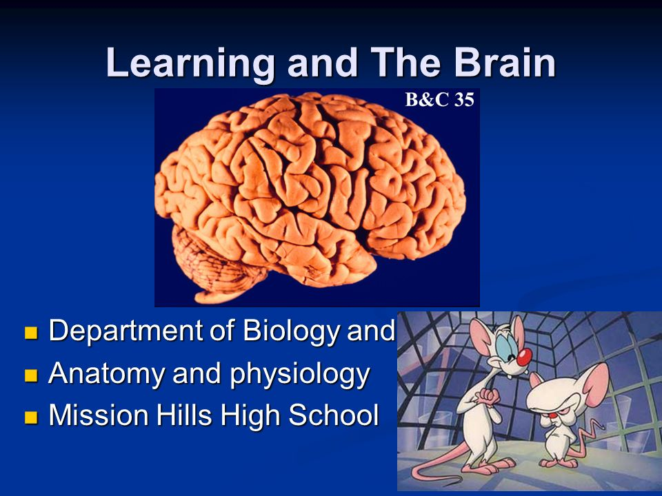 Anatomy Of The Human Brain Department Of Biology And Human Anatomy