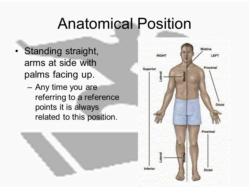 Basics Of Human Anatomy And Physiology Unit 3 Anatomical Position