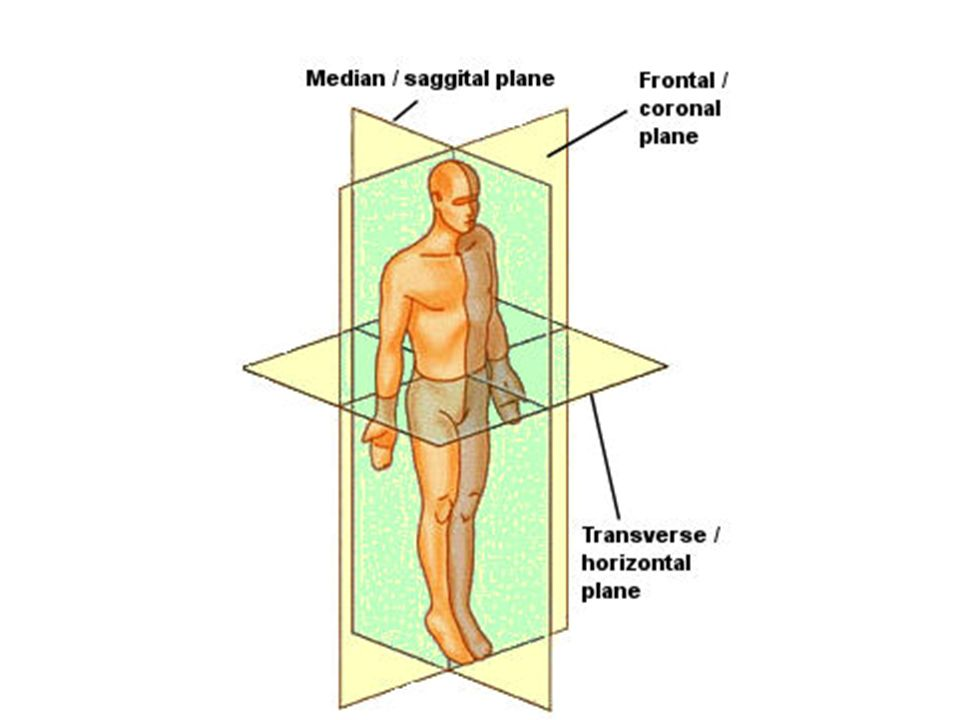 Basics of Human Anatomy and Physiology Unit # 3  Anatomical