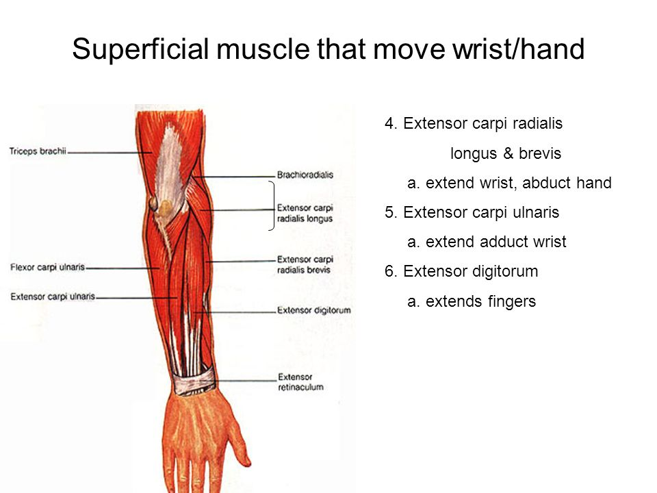 Muscles & Joints Ch. 8. Movements of the body Flexion: >in angle of ...