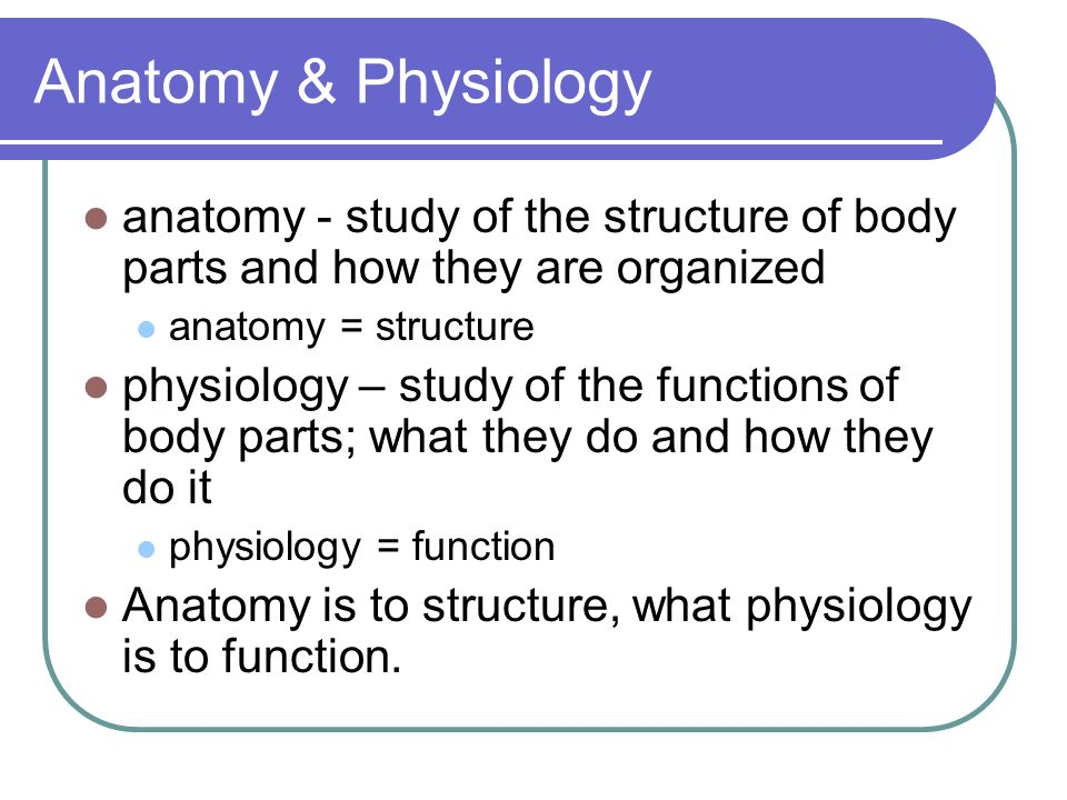 What is Anatomy & Physiology? BIG IDEAS: How does the body maintain ...