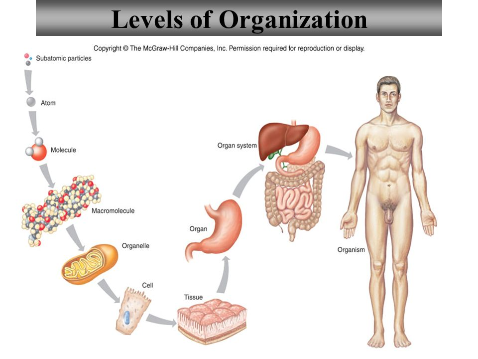 1 Chapter 1 Introduction to Human Anatomy and Physiology. - ppt download