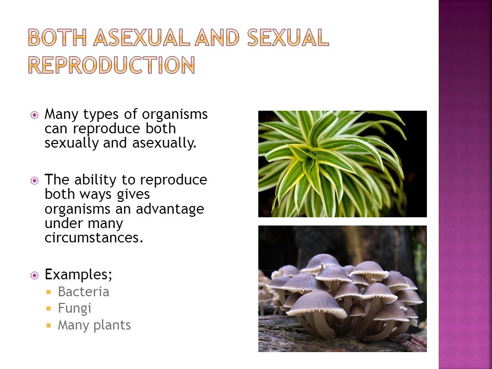 What plant can reproduce sexually and asexually